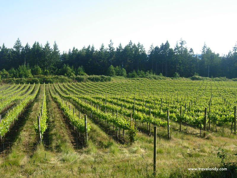 Saturna Vineyards