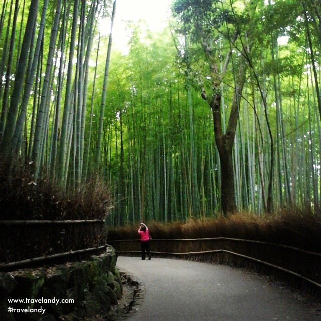 The Arashiyama bamboo grove near Kyoto is among Japan's most recognisable places. We have enough bamboos back home. How come we dont market it this way?
