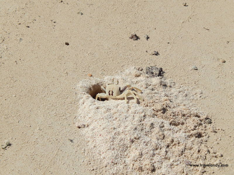 A crab peeps out of its hole at Turquoise Bay in Cape Range National Park