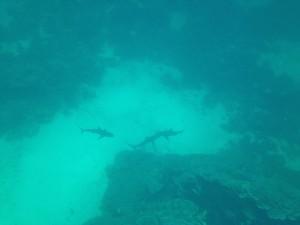 WA sharks