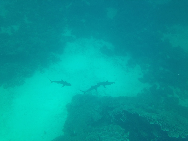 Reef sharks swim below us. Picture by Katharina Schnitzler