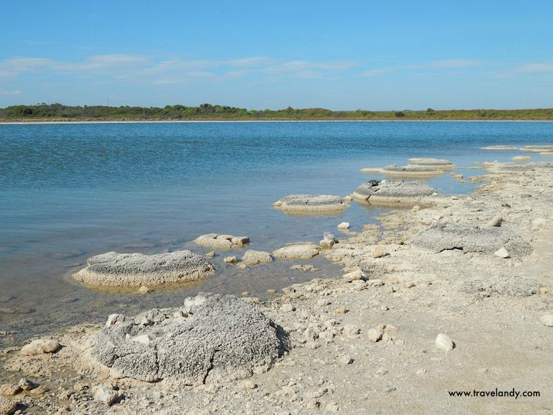 Stromatolites at Lake Thetis