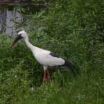 Uttarakhand to host spring bird festival