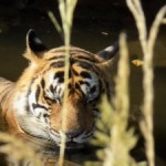 Ranthambhore plans 24X7 entry for visitors