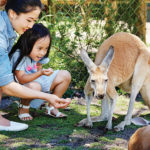 Foreign tourists to Western Australia up by 8.8%