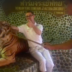Furore over tiger poke video