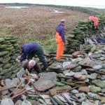 Sheep festival in Scotland seeks volunteers