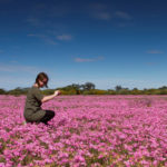 Western Australia set for a bumper wildflower season