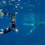 Swimming with humpbacks to continue in Western Australia