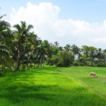 Indulge in slow travel through Vellur in Kerala