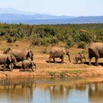 Botswana's elephant hunting proposal triggers debate